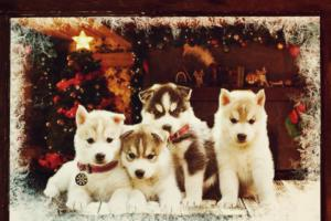 puppy-group-filters (1)